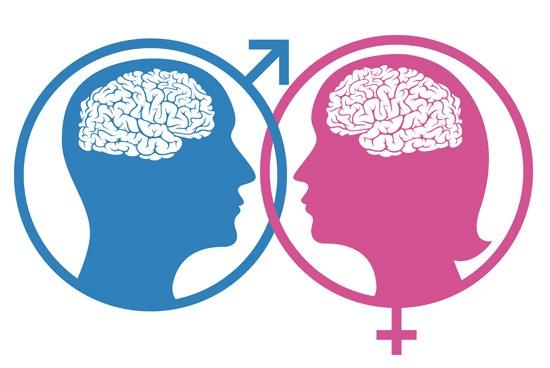 female-male-brain-differences
